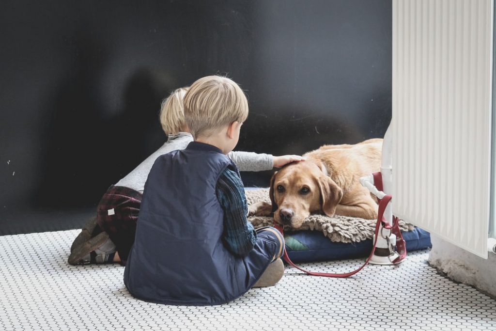 separation anxiety in dogs dont make a big deal of leaving