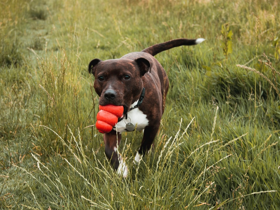 separation anxiety in dogs keep them busy