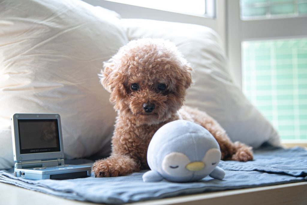 separation anxiety in dogs dog tv