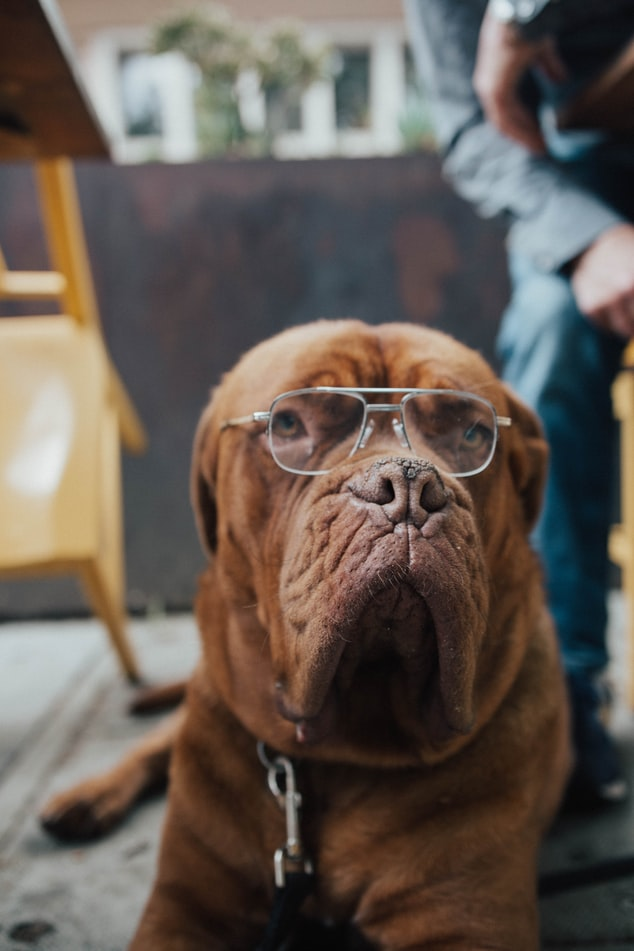 make your dog instagram famous use their personality