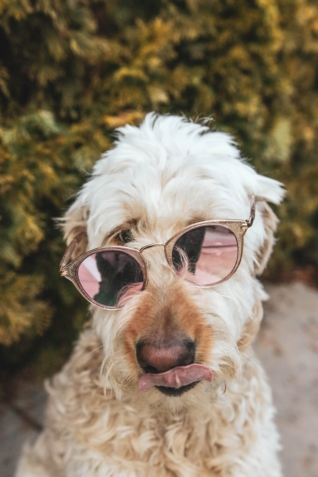 make your dog instagram famous conclusion