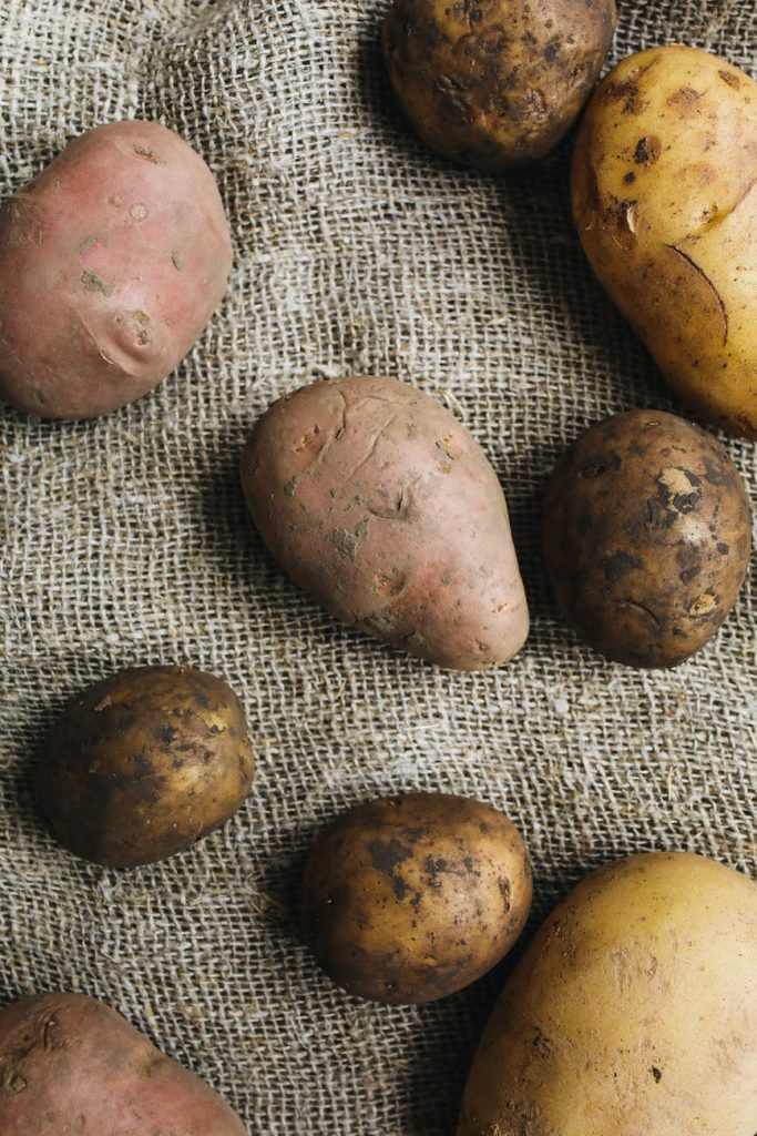 sweet potatoes for dogs how much to give to your dogs